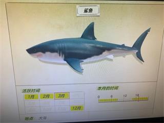 《集合啦动物森友会》全鱼价格表一览