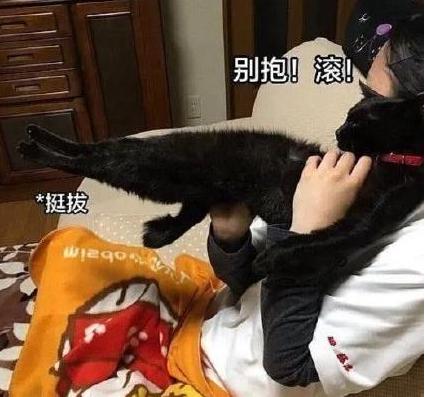 抖音钢铁直猫是什么梗